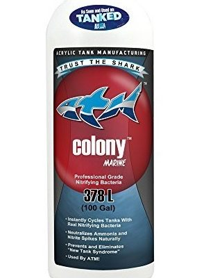 Colony 32oz